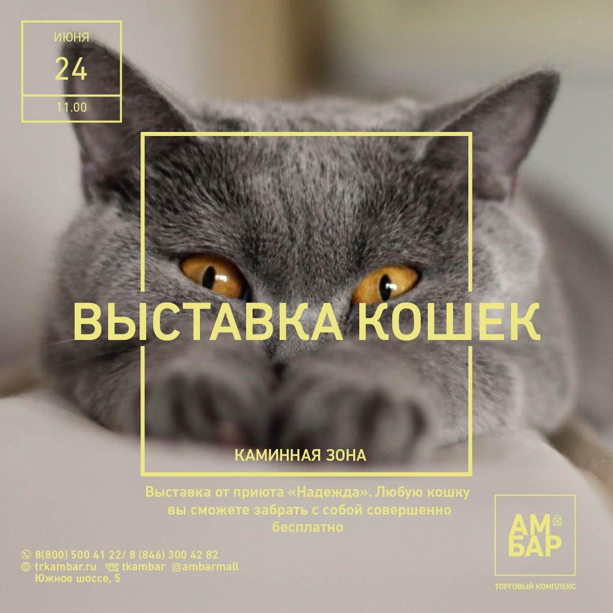 Выставка кошек в ТК АМБАР